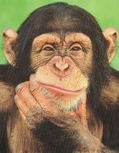 Resultado de imagem para macaco pensando