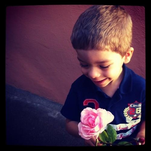 Arthur e a rosa da Dona Norma